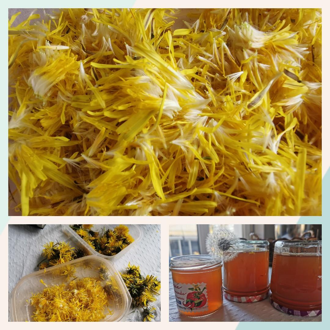 Cramaillotte ou miel de pissenlits